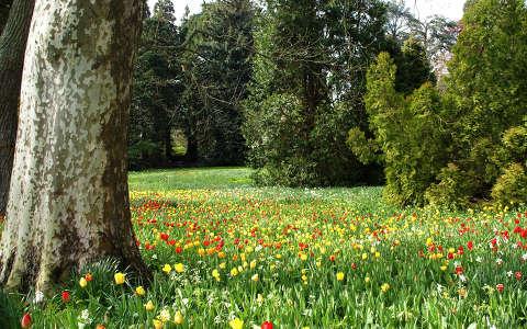 Tavasz a parkban