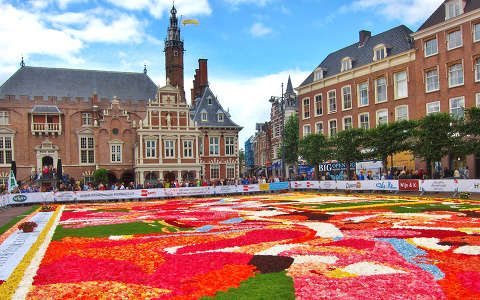 HAARLEM - HOLLAND , FLOWER CARPET AND THE CITY-HALL