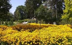 Vir�gmez� a g�d�ll�i Kir�lyi Kast�ly parkj�ban
