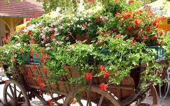 muskátli virágcsokor és dekoráció