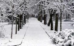 kertek és parkok tél fa fasor út