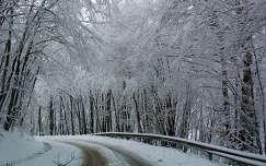 Havas fák alkotta alagút a Csanyik völgyben