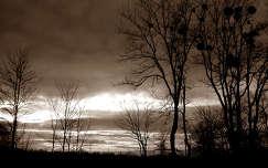 Szomódi szép naplemente fákkal(Orbán Márk)