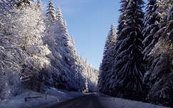 Szlovákia, Alacsony-Tátra, útban Chopok felé