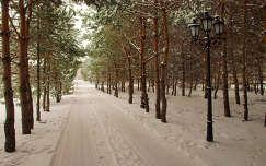 Inárcs, Bodrogi kúria parkja
