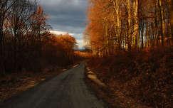 Sarvaly erdő