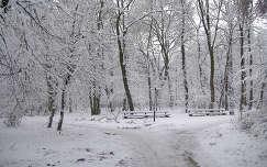 Szarvas. Erzsébet liget-téli út. Fotó: Csonki
