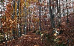 Mátra ősszel, Magyarország