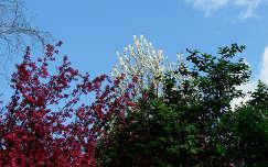 A természet szinei: piros, fehér, zöld
