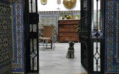 Cordoba, una casa con un perro Voogd