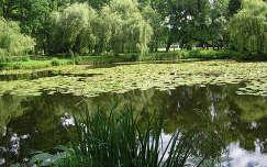 Tóalmási kastély parkja, tavirózsák
