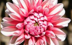 Virág a kertben
