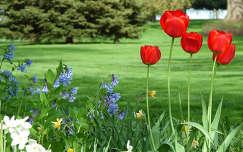 Tavaszi park