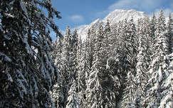 Fenyőerdő, Mühlbach am Hochkönig, Ausztria