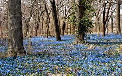 Virágmező a tavaszi erdőben