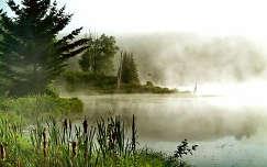 bambusz köd erdő folyó
