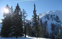 örökzöld ausztria fenyő alpok hegy tél