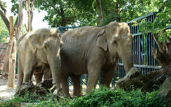 Magyar elefántok