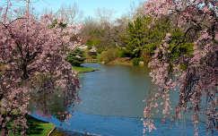 Virágzó fák a tavaszi parkban