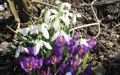 A tavasz első virágai
