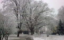 Tél Szarvason
