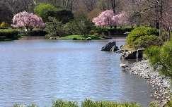 Tavaszi japánkert