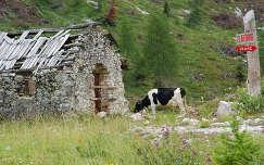 A szlovéniai hegyekben
