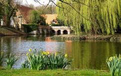 Tavasz, nárciszok a folyóparton