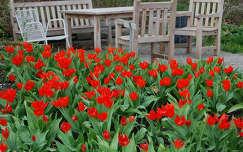 tavaszi virág kertek és parkok tulipán tavasz