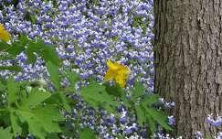 Tavaszi vadvirágok