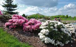 tavaszi virág rododendron kertek és parkok tavasz
