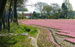 Holland - Noordwijk, Bloembollenvelden