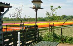Holland-De Zilk, Bloembollenvelden en Duiventil