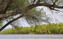 Leányfalunál a tavaszi Duna