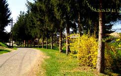 Rédics, Petőfi út, Zala megye, Magyarország