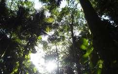 Kis Antillak - Tropusi erdö - Guadeloupe, Nemzeti Park