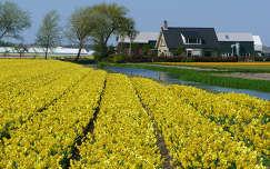 Nederland-De Zilk, Bloembollenvelden