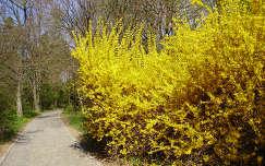 aranyeső út tavasz