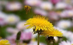 Méh a levegőben :)