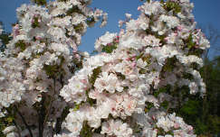 Virágzó csoda