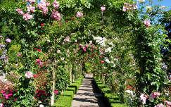 út rózsa kertek és parkok