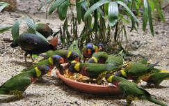 papagájok az állatkertben
