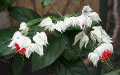 trópusi virág