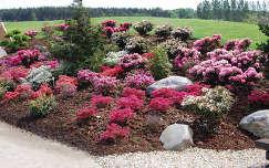 kertek és parkok nochten tavaszi virág németország findlingspark