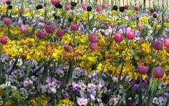 Budapesti virágözön