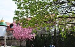 Tüke-kút és a Citrom utcai városfal, Pécs