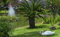 Szent Katalin Park, Funchal