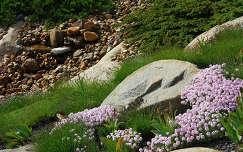 kertek és parkok nochten kövek és sziklák vadvirág németország findlingspark