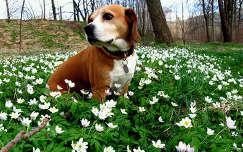 vadvirág virágmező kutya