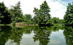 mosonmagyaróvári tó(Orbán Márk)